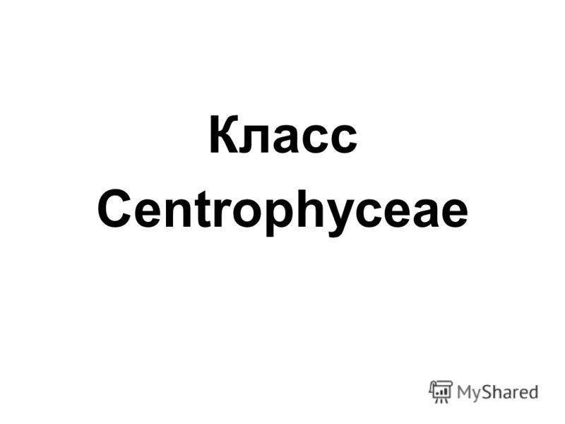 Класс Centrophyceae