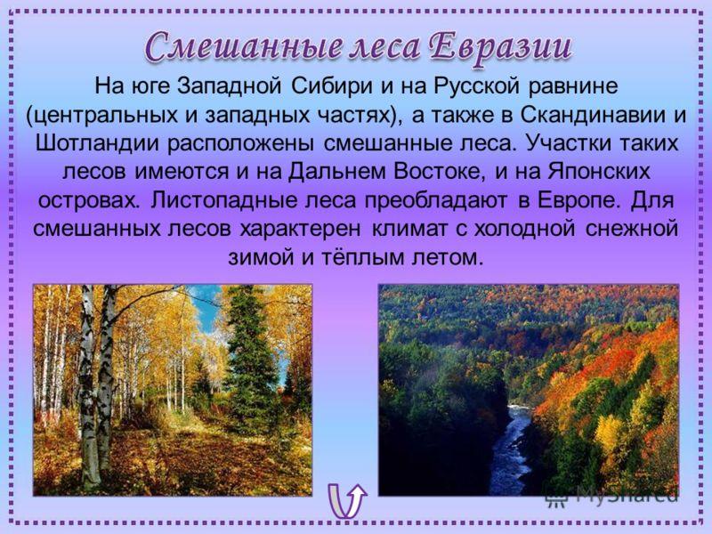 На юге Западной Сибири и на Русской равнине (центральных и западных частях), а также в Скандинавии и Шотландии расположены смешанные леса. Участки таких лесов имеются и на Дальнем Востоке, и на Японских островах. Листопадные леса преобладают в Европе