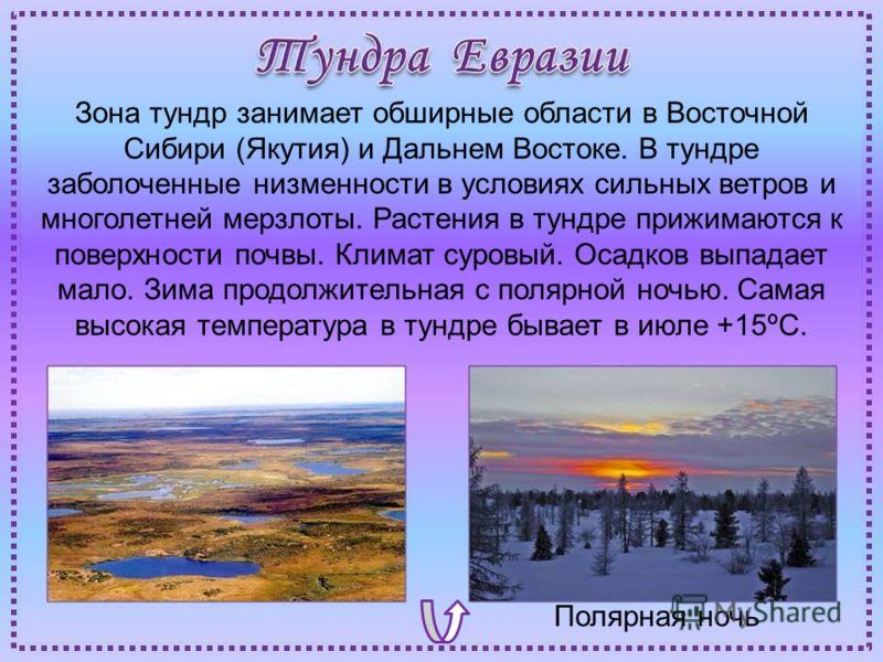 Полярная ночь Зона тундр занимает обширные области в Восточной Сибири (Якутия) и Дальнем Востоке. В тундре заболоченные низменности в условиях сильных ветров и многолетней мерзлоты. Растения в тундре прижимаются к поверхности почвы. Климат суровый. О