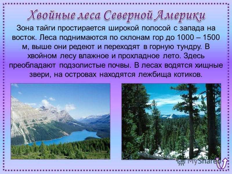 Зона тайги простирается широкой полосой с запада на восток. Леса поднимаются по склонам гор до 1000 – 1500 м, выше они редеют и переходят в горную тундру. В хвойном лесу влажное и прохладное лето. Здесь преобладают подзолистые почвы. В лесах водятся