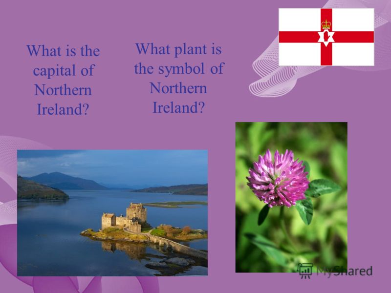 What is the capital of Northern Ireland? What plant is the symbol of Northern Ireland?