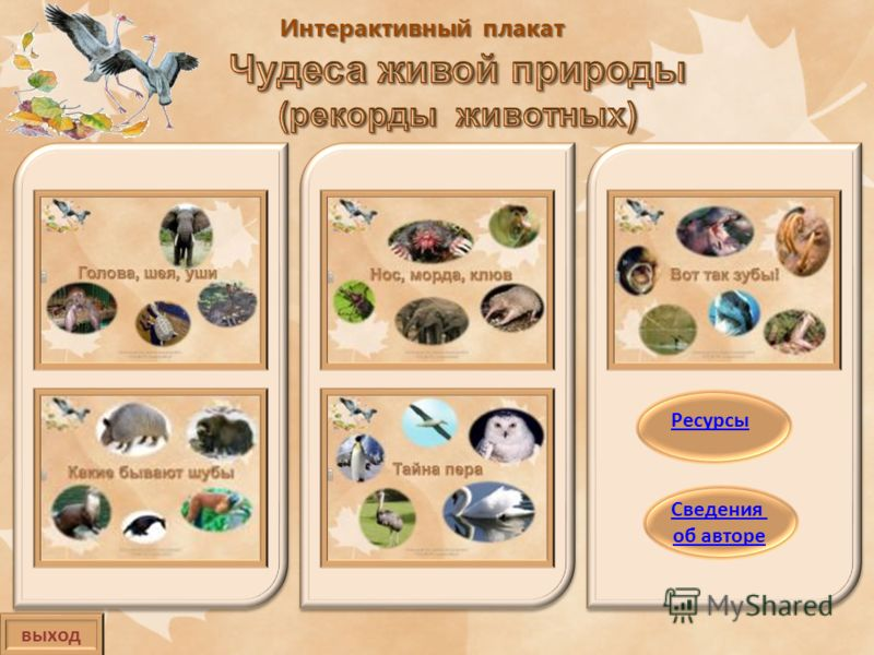Интерактивный плакат выход Сведения об авторе Ресурсы