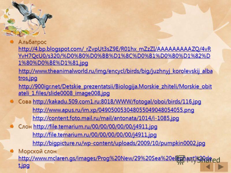 Альбатрос http://4.bp.blogspot.com/_rZvpUt3sZ9E/R01hx_mZzZI/AAAAAAAAAZQ/4vR YvH7QcU0/s320/%D0%B0%D0%BB%D1%8C%D0%B1%D0%B0%D1%82%D 1%80%D0%BE%D1%81.jpg http://4.bp.blogspot.com/_rZvpUt3sZ9E/R01hx_mZzZI/AAAAAAAAAZQ/4vR YvH7QcU0/s320/%D0%B0%D0%BB%D1%8C%D