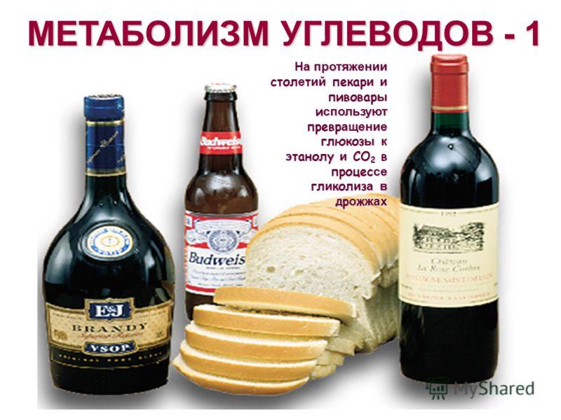 МЕТАБОЛИЗМ УГЛЕВОДОВ - 1 На протяжении стол е т ий пекар и и пивовар ы и спользуют превр ащение глюкоз ы к э танолу и CO 2 в процес се гл и кол и з а в др о ж жах