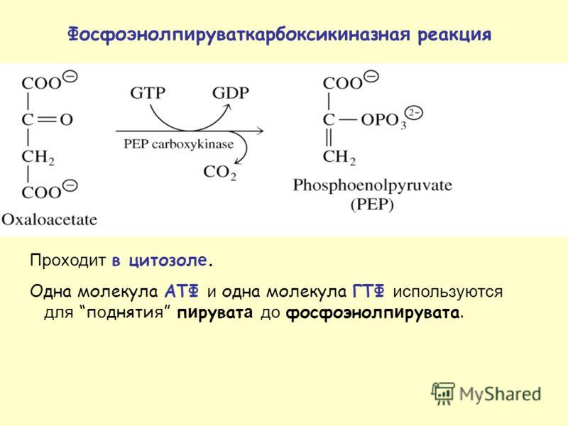 Проходит в цитозол е. Одна молекула АТФ и одна молекула ГТФ используются для п о дняти я п и руват а до фосфоэнолп и рувата. Фосфо э нолп и руваткарбоксик и назна я реакц и я