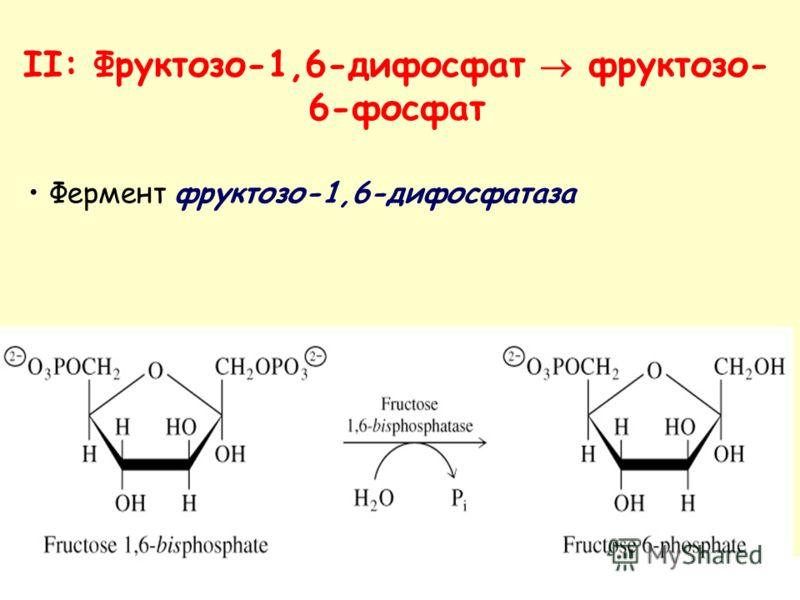 Фермент фруктозо-1,6-дифосфатаза II: Фруктозо-1,6-дифосфат фруктозо- 6-фосфат