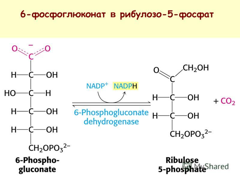 6-фосфоглюконат в рибулозо-5-фосфат