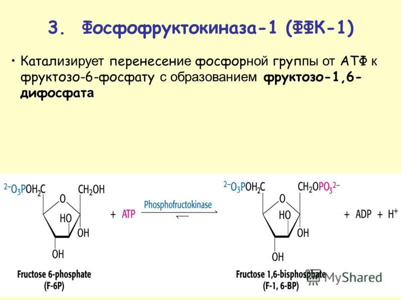 Катал и з ирует перенесен ие фосфор ной груп пы от АТФ к фруктозо-6-фосфату с образованием фруктозо-1,6- дифосфат а 3. Фосфофрукток и наза-1 (ФФК-1)