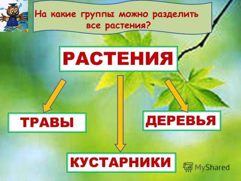РАСТЕНИЯ ТРАВЫ ДЕРЕВЬЯ КУСТАРНИКИ На какие группы можно разделить все растения?