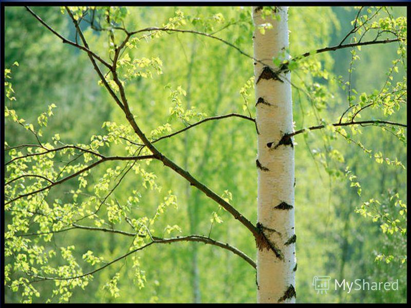 «Для всего, что существует в природе… в русском языке есть великое множество хороших слов и названий», - Константин Георгиевич Паустовский