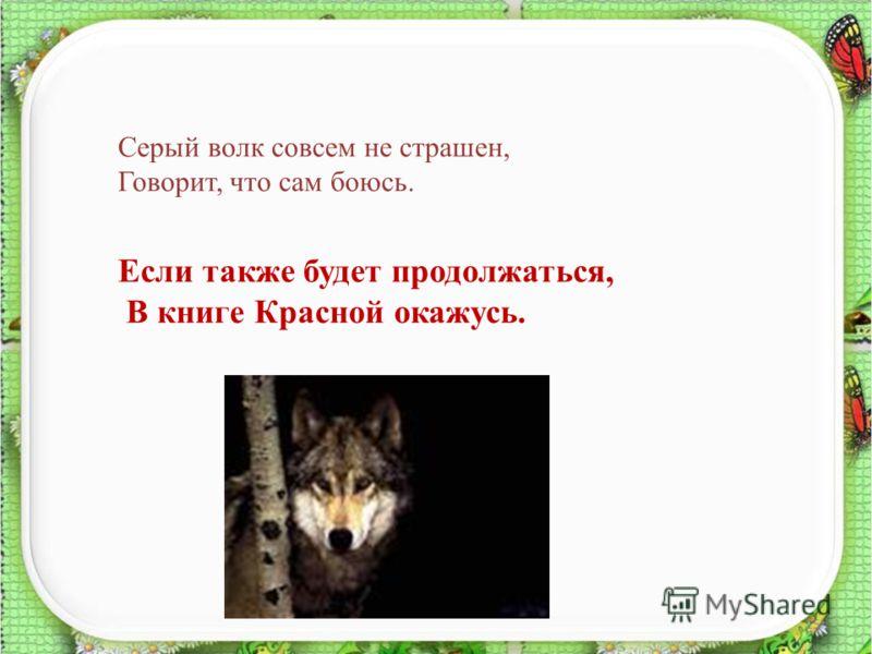 15 Серый волк совсем не страшен, Говорит, что сам боюсь. Если также будет продолжаться, В книге Красной окажусь.