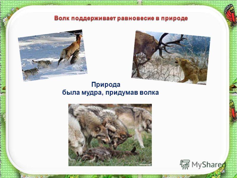 6 Природа была мудра, придумав волка