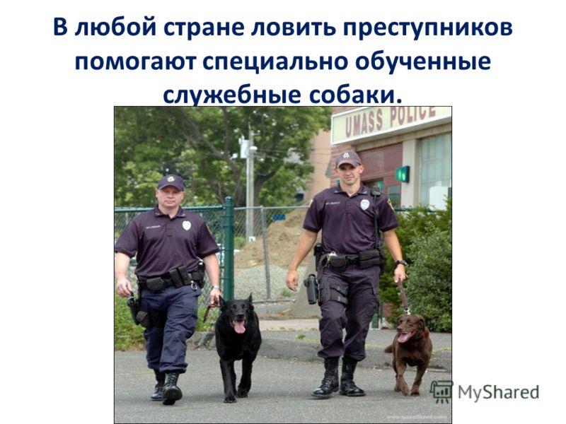 В любой стране ловить преступников помогают специально обученные служебные собаки.