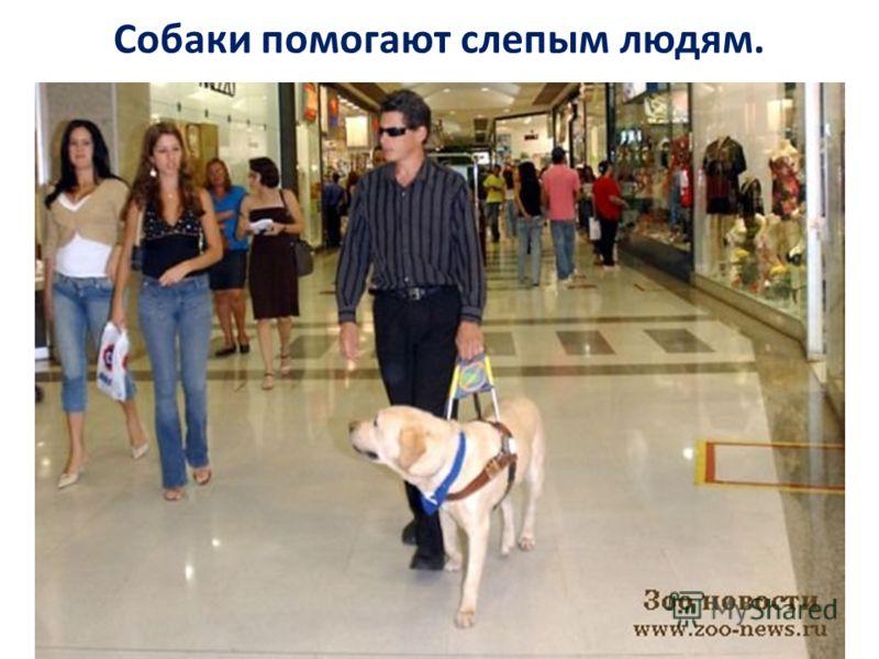 Собаки помогают слепым людям.