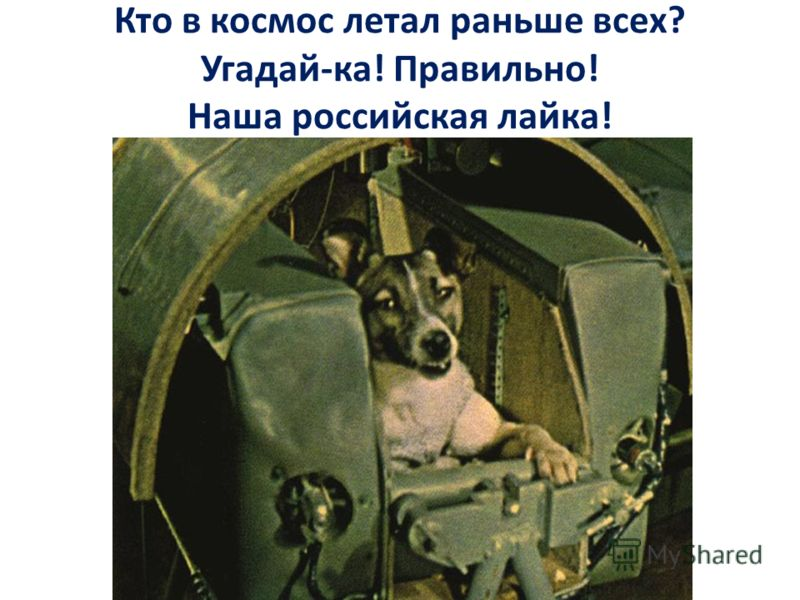 Кто в космос летал раньше всех? Угадай-ка! Правильно! Наша российская лайка!