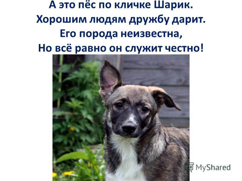 А это пёс по кличке Шарик. Хорошим людям дружбу дарит. Его порода неизвестна, Но всё равно он служит честно!