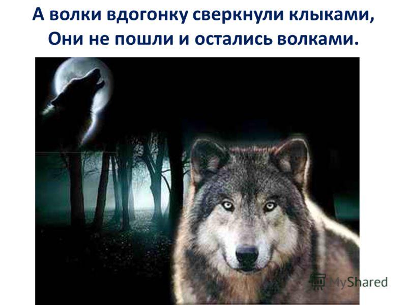 А волки вдогонку сверкнули клыками, Они не пошли и остались волками.