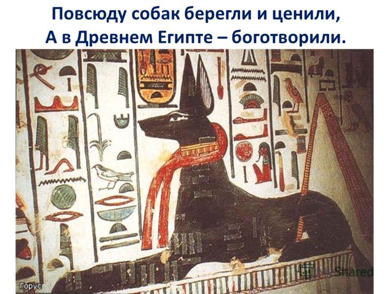 Повсюду собак берегли и ценили, А в Древнем Египте – боготворили.