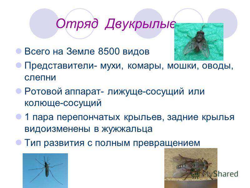 Отряд Двукрылые Всего на Земле 8500 видов Представители- мухи, комары, мошки, оводы, слепни Ротовой аппарат- лижуще-сосущий или колюще-сосущий 1 пара перепончатых крыльев, задние крылья видоизменены в жужжальца Тип развития с полным превращением