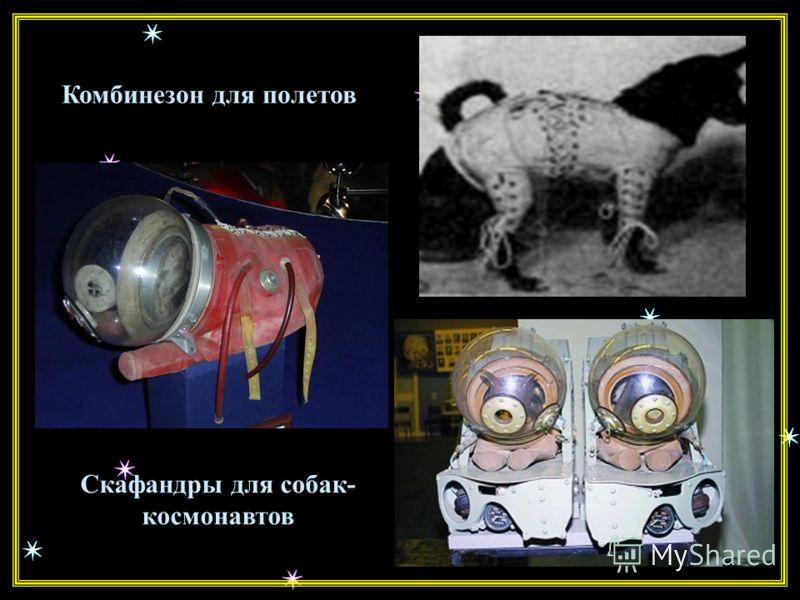 За весь периода экспериментов - вплоть до весны 1961 года было запущено 29 ракет с животными. При этом погибло 10 собак. Собаки гибли от разгерметизации кабины, отказа парашютной системы, неполадок в системе жизнеобеспечения. За весь периода эксперим