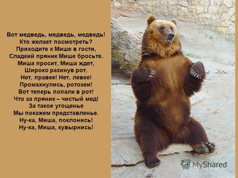 Вот медведь, медведь, медведь! Кто желает посмотреть? Приходите к Мише в гости, Сладкий пряник Мише бросьте. Миша просит, Миша ждет, Широко разинув рот. Нет, правее! Нет, левее! Промахнулись, ротозеи! Вот теперь попали в рот! Что за пряник – чистый м
