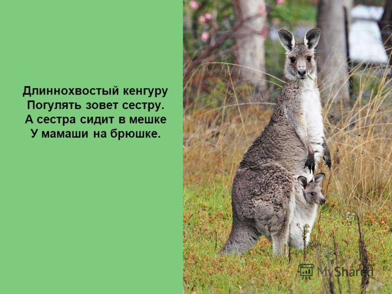 Длиннохвостый кенгуру Погулять зовет сестру. А сестра сидит в мешке У мамаши на брюшке.