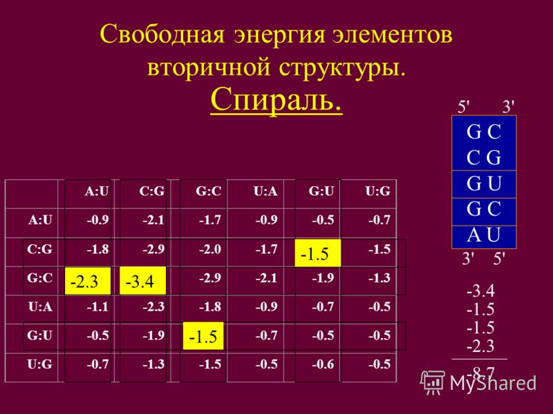A:UC:GG:CU:AG:UU:G A:U-0.9-2.1-1.7-0.9-0.5-0.7 C:G-1.8-2.9-2.0-1.7-1.5 G:C-2.3-3.4-2.9-2.1-1.9-1.3 U:A-1.1-2.3-1.8-0.9-0.7-0.5 G:U-0.5-1.9-1.5-0.7-0.5 U:G-0.7-1.3-1.5-0.5-0.6-0.5 -2.3 -1.5 -3.4 -8.7 Свободная энергия элементов вторичной структуры. Сп