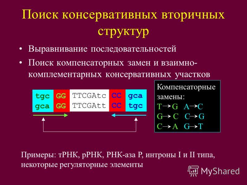 Поиск консервативных вторичных структур Выравнивание последовательностей Поиск компенсаторных замен и взаимно- комплементарных консервативных участков tgc gcaGG TTCGAtc TTCGAttCC gca tgc Компенсаторные замены: T G A C G C C G C A G T Примеры: тРНК, р
