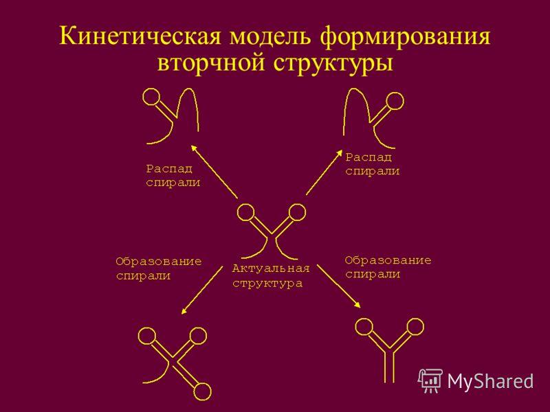 Кинетическая модель формирования вторчной структуры
