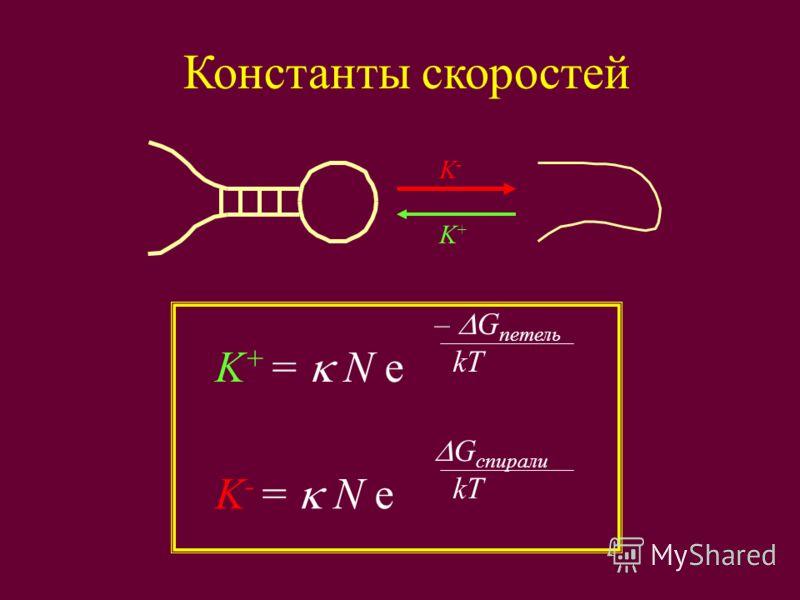 Константы скоростей K+K+ K-K- K + = N e – G петель kT K - = N e G спирали kT