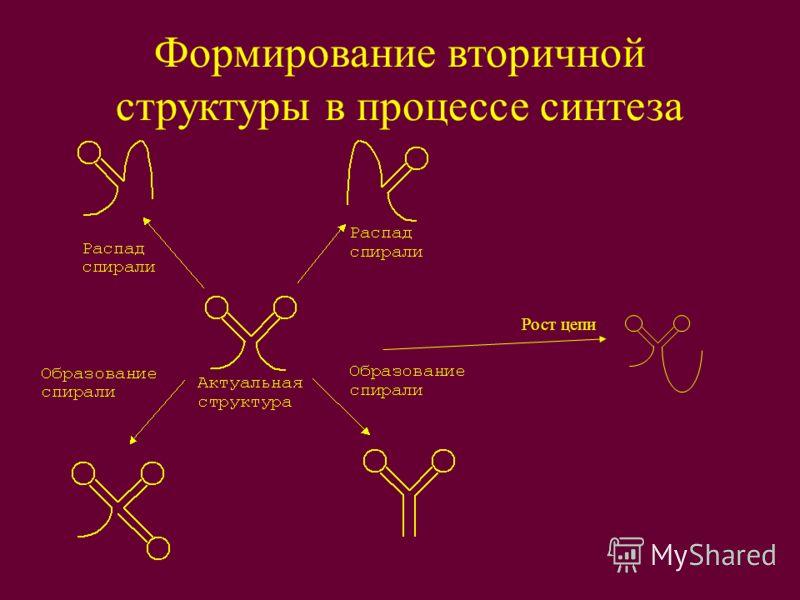 Формирование вторичной структуры в процессе синтеза Рост цепи