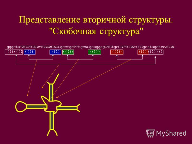 Представление вторичной структуры. Скобочная структура gggctaTAGCTCAGcTGGGAGAGCgcctgcTTtgcACgcaggagGTCtgcGGTTCGAtCCCgcatagctccaCCA ((((((( (((( )))) ((((( ))))) ((((( )))))))))))
