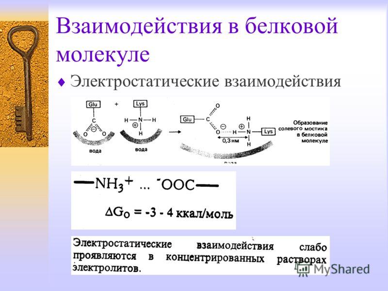 Взаимодействия в белковой молекуле Электростатические взаимодействия