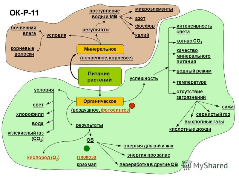 ОК-Р-11 Питание растений Органическое (почвенное, корневое) Минеральное (воздушное, фотосинтез) почвенная влага корневые волоски поступление воды и МВ азот фосфор калий микроэлементы условия результаты условия результаты свет хлорофилл вода углекислы