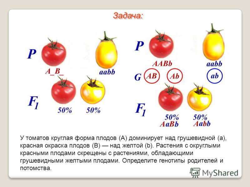У томатов круглая форма плодов (А) доминирует над грушевидной (а), красная окраска плодов (В) над желтой (b). Растения с округлыми красными плодами скрещены с растениями, обладающими грушевидными желтыми плодами. Определите генотипы родителей и потом