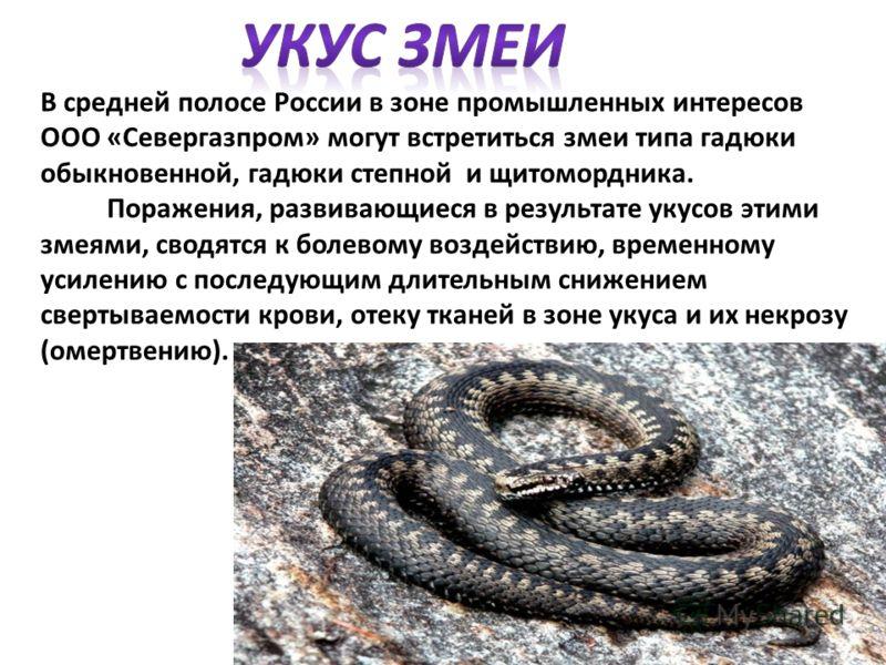 В средней полосе России в зоне промышленных интересов ООО «Севергазпром» могут встретиться змеи типа гадюки обыкновенной, гадюки степной и щитомордника. Поражения, развивающиеся в результате укусов этими змеями, сводятся к болевому воздействию, време