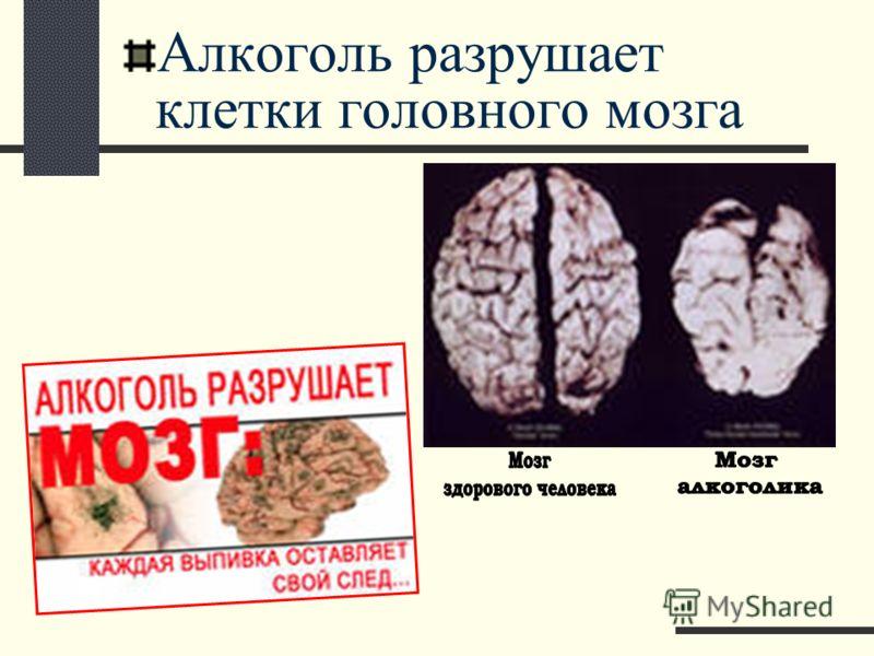 Алкоголь разрушает клетки головного мозга