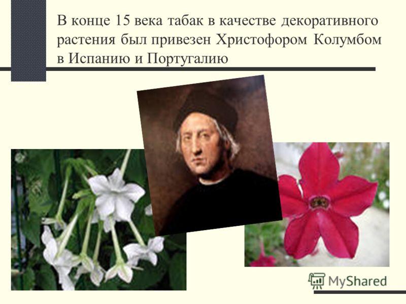 В конце 15 века табак в качестве декоративного растения был привезен Христофором Колумбом в Испанию и Португалию