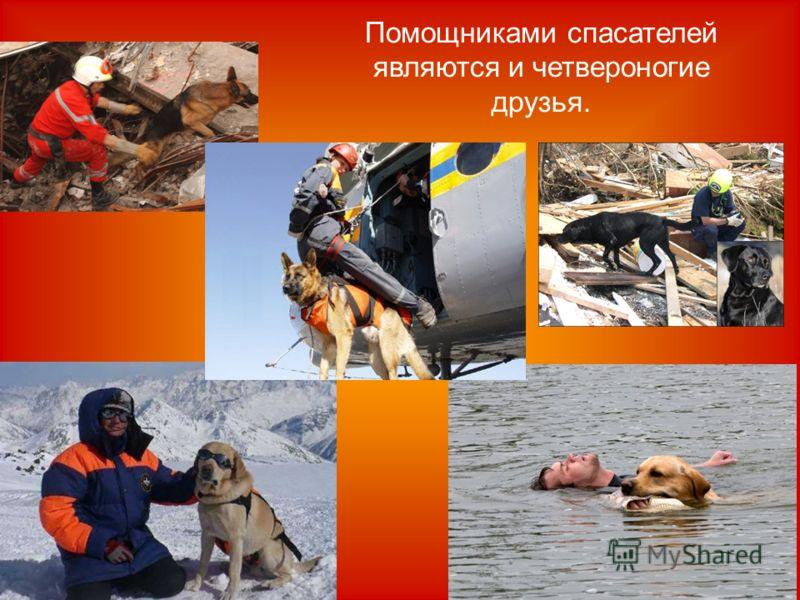 Помощниками спасателей являются и четвероногие друзья.