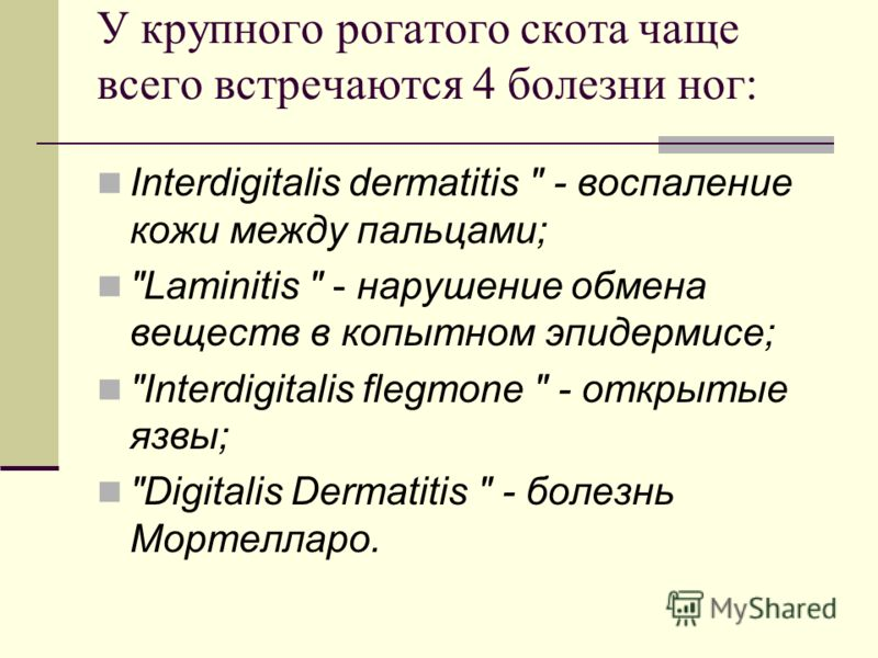 У крупного рогатого скота чаще всего встречаются 4 болезни ног: Interdigitalis dermatitis
