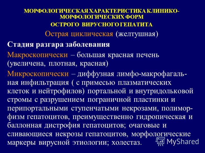 МОРФОЛОГИЧЕСКАЯ ХАРАКТЕРИСТИКА КЛИНИКО- МОРФОЛОГИЧЕСКИХ ФОРМ ОСТРОГО ВИРУСНОГО ГЕПАТИТА Острая циклическая (желтушная) Стадия разгара заболевания Макроскопически – большая красная печень (увеличена, плотная, красная) Микроскопически – диффузная лимфо