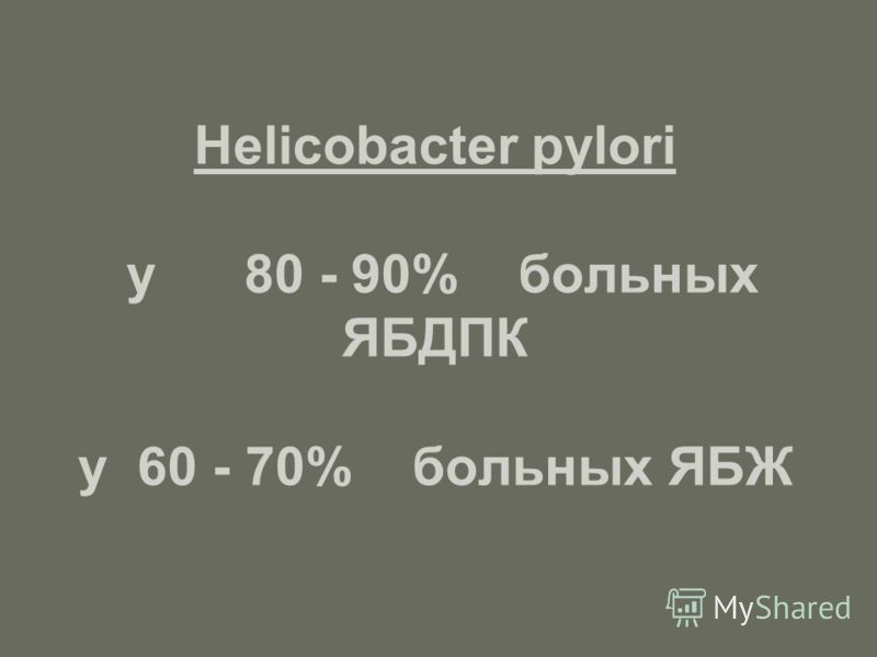 Helicobacter pylori у 80 - 90% больных ЯБДПК у 60 - 70% больных ЯБЖ