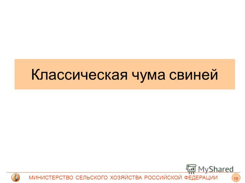 МИНИСТЕРСТВО СЕЛЬСКОГО ХОЗЯЙСТВА РОССИЙСКОЙ ФЕДЕРАЦИИ Классическая чума свиней 19