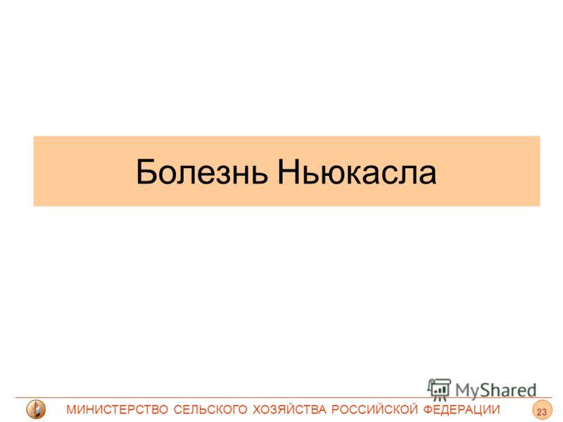 МИНИСТЕРСТВО СЕЛЬСКОГО ХОЗЯЙСТВА РОССИЙСКОЙ ФЕДЕРАЦИИ Болезнь Ньюкасла 23