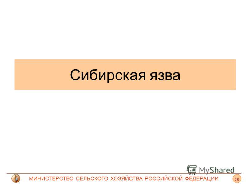 МИНИСТЕРСТВО СЕЛЬСКОГО ХОЗЯЙСТВА РОССИЙСКОЙ ФЕДЕРАЦИИ Сибирская язва 28