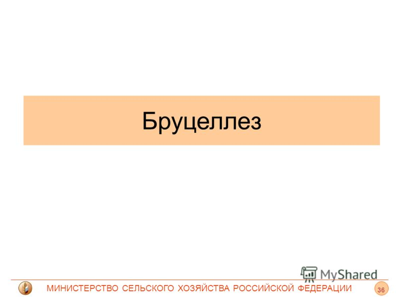 МИНИСТЕРСТВО СЕЛЬСКОГО ХОЗЯЙСТВА РОССИЙСКОЙ ФЕДЕРАЦИИ Бруцеллез 36