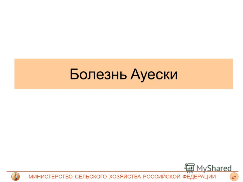 МИНИСТЕРСТВО СЕЛЬСКОГО ХОЗЯЙСТВА РОССИЙСКОЙ ФЕДЕРАЦИИ Болезнь Ауески 47