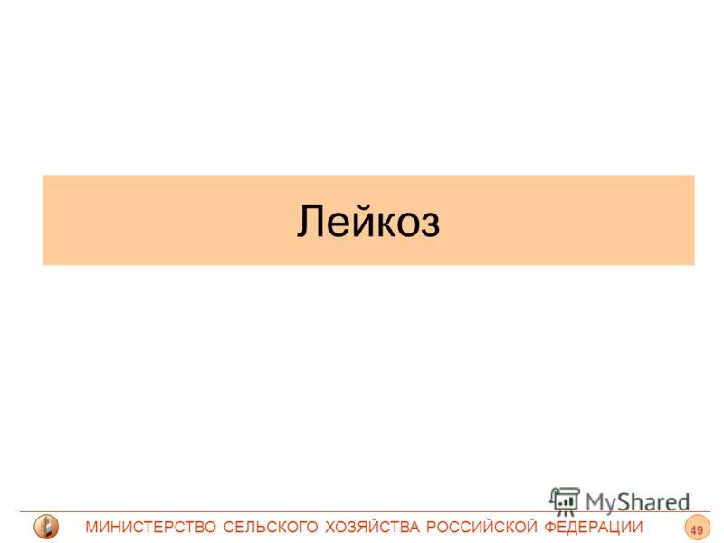 МИНИСТЕРСТВО СЕЛЬСКОГО ХОЗЯЙСТВА РОССИЙСКОЙ ФЕДЕРАЦИИ Лейкоз 49