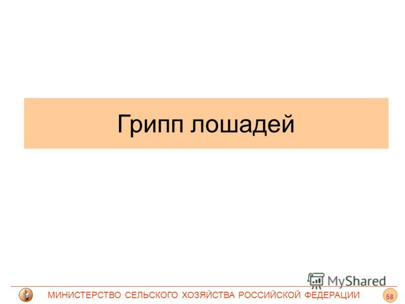МИНИСТЕРСТВО СЕЛЬСКОГО ХОЗЯЙСТВА РОССИЙСКОЙ ФЕДЕРАЦИИ Грипп лошадей 58
