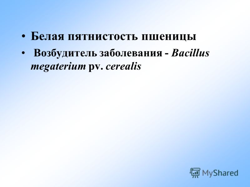 Белая пятнистость пшеницы Возбудитель заболевания - Bacillus megaterium pv. cerealis